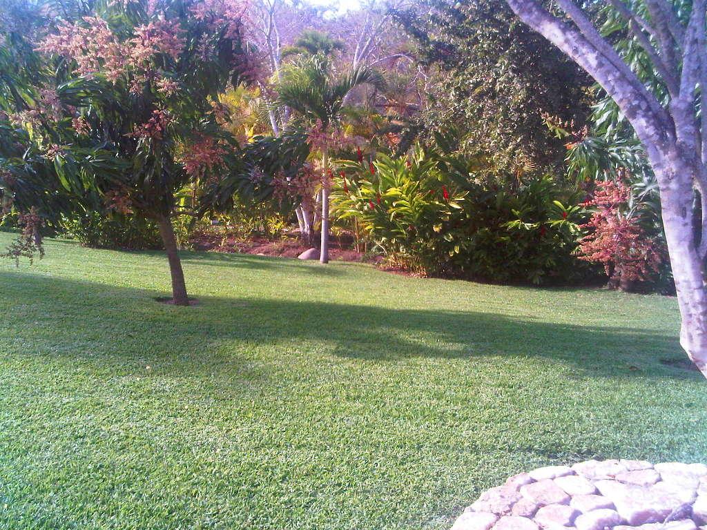 Mantenimiento de jardines viveros nacional puerto for Mantenimiento de jardines